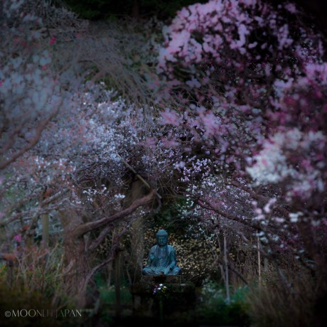 ANOTHER SPRING | 今年の春は
