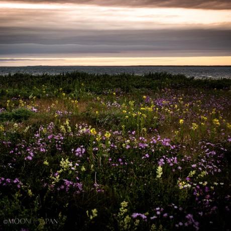 FLEEING SUMMER | 短い夏の夕暮れ