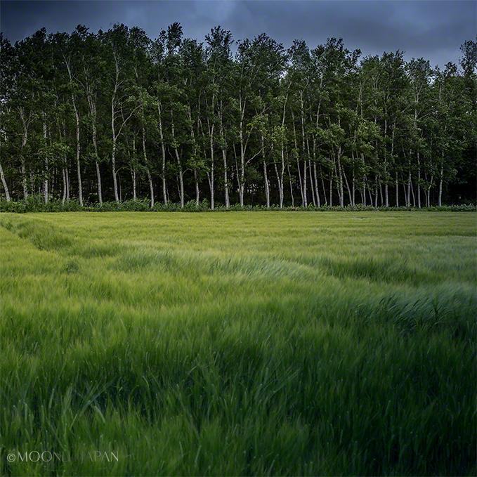 GREEN BILLOWS