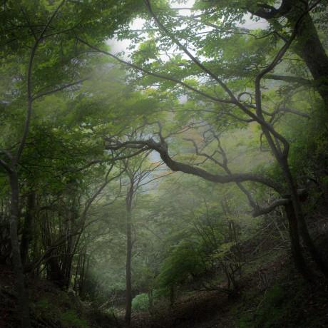 DEEP INTO THE VALLEY | 山の神のつぶやき