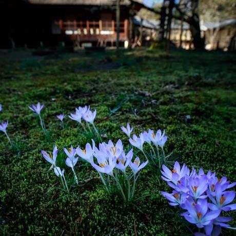 SPRING FAIRIES | 春の妖精たち